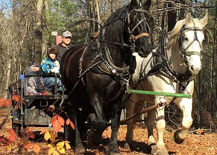 Two horses, one black & one white, pulling a wagon full of people through the woods during the fall.